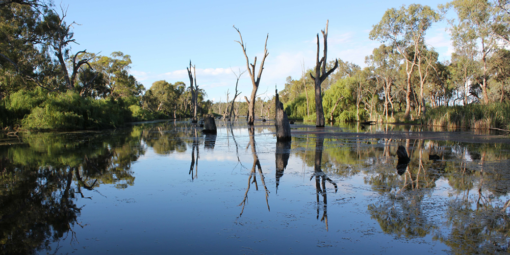 Gunbower Torrumbarry Creek